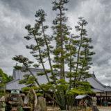 Shrine & Pine